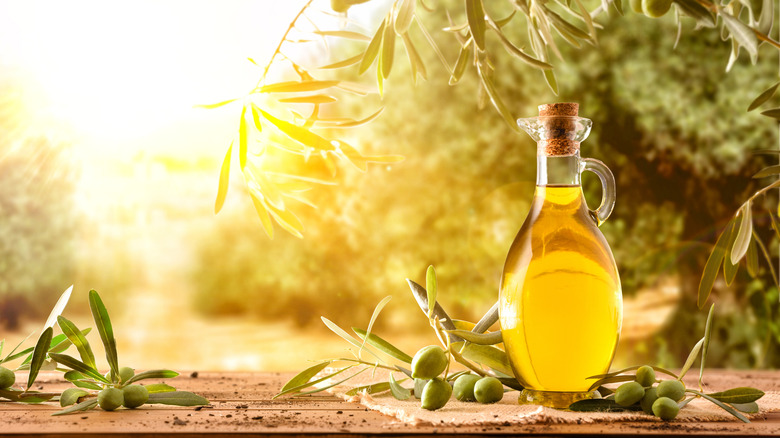 olive oil next to olive tree